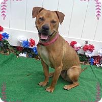 Adopt A Pet :: CATHY - Marietta, GA