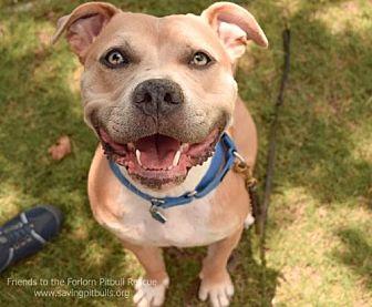 Pit Bull Terrier Dog for adoption in Dallas, Georgia - Deno
