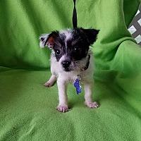 Adopt A Pet :: Talus - Toronto, ON