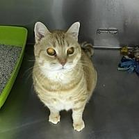 Adopt A Pet :: Angelica - Byron Center, MI
