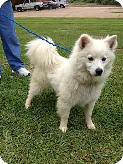 Spitz (Unknown Type, Medium) Mix Dog for adoption in Groton, Massachusetts - Brooklyn
