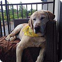 Adopt A Pet :: Sam - Loveland, CO