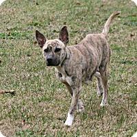 Adopt A Pet :: Lyric - Lufkin, TX