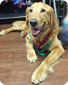 Golden Retriever Mix Dog for adoption in BIRMINGHAM, Alabama - Beau III