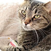 Adopt A Pet :: ATHENA - Royal Oak, MI