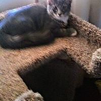 Adopt A Pet :: GRAYLORD - Phoenix, AZ