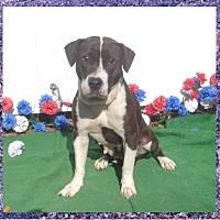 Adopt A Pet :: LEAH - Marietta, GA