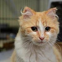 Adopt A Pet :: KENZIE - Newaygo, MI