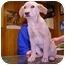 Photo 1 - Golden Retriever/Labrador Retriever Mix Dog for adoption in Yorkville, Tennessee - Lester