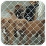 Photo 4 - Chesapeake Bay Retriever/Akita Mix Puppy for adoption in Ripley, Tennessee - Chessy Babies