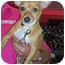 Photo 1 - Chihuahua Mix Dog for adoption in Orlando, Florida - Freddie