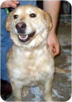 Retriever (Unknown Type) Mix Dog for adoption in Mt. Vernon, Illinois - Clara