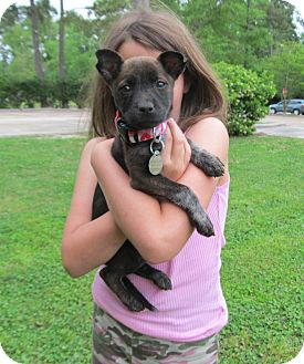 Boxer/Black Mouth Cur Mix Puppy for adoption in Kingwood, Texas - Maggie