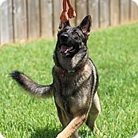 Adopt A Pet :: Lucy Lu - Miami, FL
