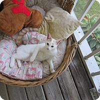 Adopt A Pet :: Andy - Seminole, FL