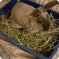 Adopt A Pet :: Agatha - Maple Shade, NJ