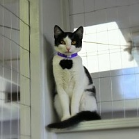Adopt A Pet :: Oreo Louisiana - Denver, CO