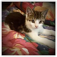 Adopt A Pet :: HOYT - Medford, WI