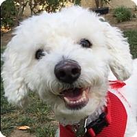 Adopt A Pet :: Pluto - La Costa, CA
