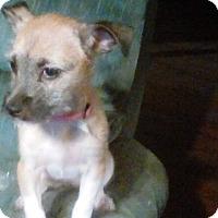 Adopt A Pet :: Quinn - Rexford, NY