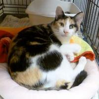 Adopt A Pet :: Patsy - Westville, IN