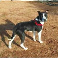 Adopt A Pet :: Buddy - Las Cruces, NM