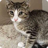Adopt A Pet :: Tom - Plainfield, IL