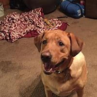 Adopt A Pet :: Riley - Warrington, PA