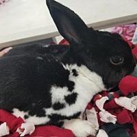 Adopt A Pet :: Nic - Kenosha, WI