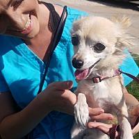 Adopt A Pet :: Izzy - Ogden, UT