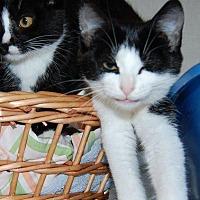 Adopt A Pet :: Gaile - Brainardsville, NY