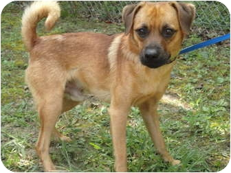 Terrier (Unknown Type, Small) Mix Dog for adoption in Spruce Pine, North Carolina - Colby