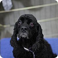 Adopt A Pet :: MANDY - Tacoma, WA