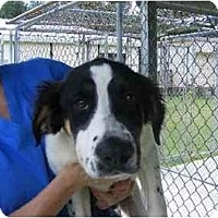 Adopt A Pet :: Royce - Alexandria, VA