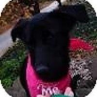 Adopt A Pet :: Sofie - New Boston, NH