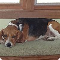 Adopt A Pet :: Matilda - Parsons, TN