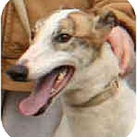 Adopt A Pet :: Kim (Jodi's Fabulous) - Louisville, KY
