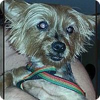 Adopt A Pet :: Demi aka Diamond - Plainview, NY