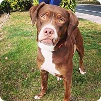 Adopt A Pet :: Katniss - Mission Viejo, CA