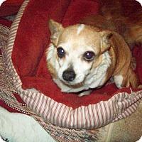 Adopt A Pet :: Penny Lane - Butler, OH