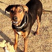 Adopt A Pet :: Seth CP - Dallas, TX