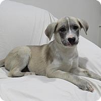 Adopt A Pet :: Mallory - Randolph, NJ