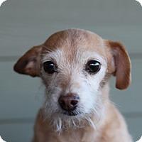 Adopt A Pet :: Mitzie - Bend, OR