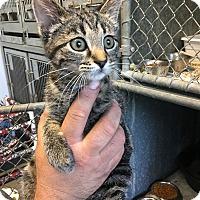 Adopt A Pet :: Jo Jo - Loogootee, IN