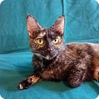 Adopt A Pet :: Francesca - Columbus, OH