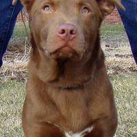 Adopt A Pet :: Morgan - Greenfield, IN