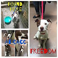 Adopt A Pet :: Chi - Wheaton, IL