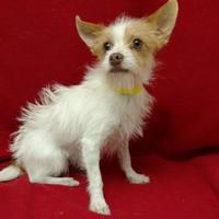 Adopt A Pet :: Lenny($250) - Redding, CA