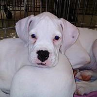 Adopt A Pet :: Hunk Orlando Chapter - Venice, FL