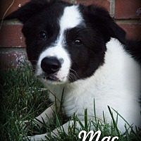 Adopt A Pet :: Mac - Anaheim Hills, CA